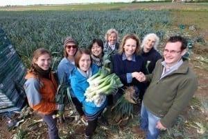 Leek gleaning 4
