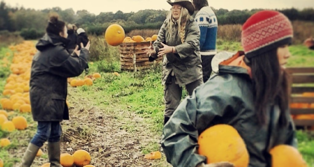 Pumpkin gleaning 1