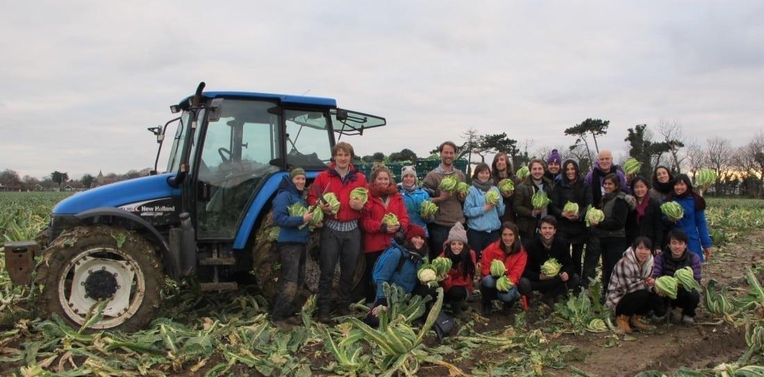 Brassica gleaning4