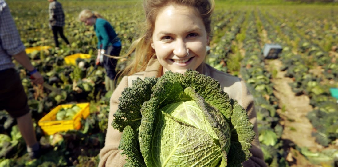 Brassica gleaning 8