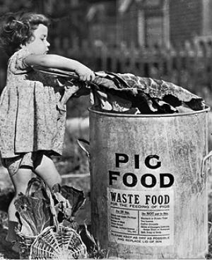 During WWII the government actively promoted waste feeding pigs.