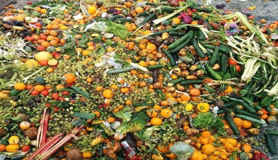 food waste_website crop