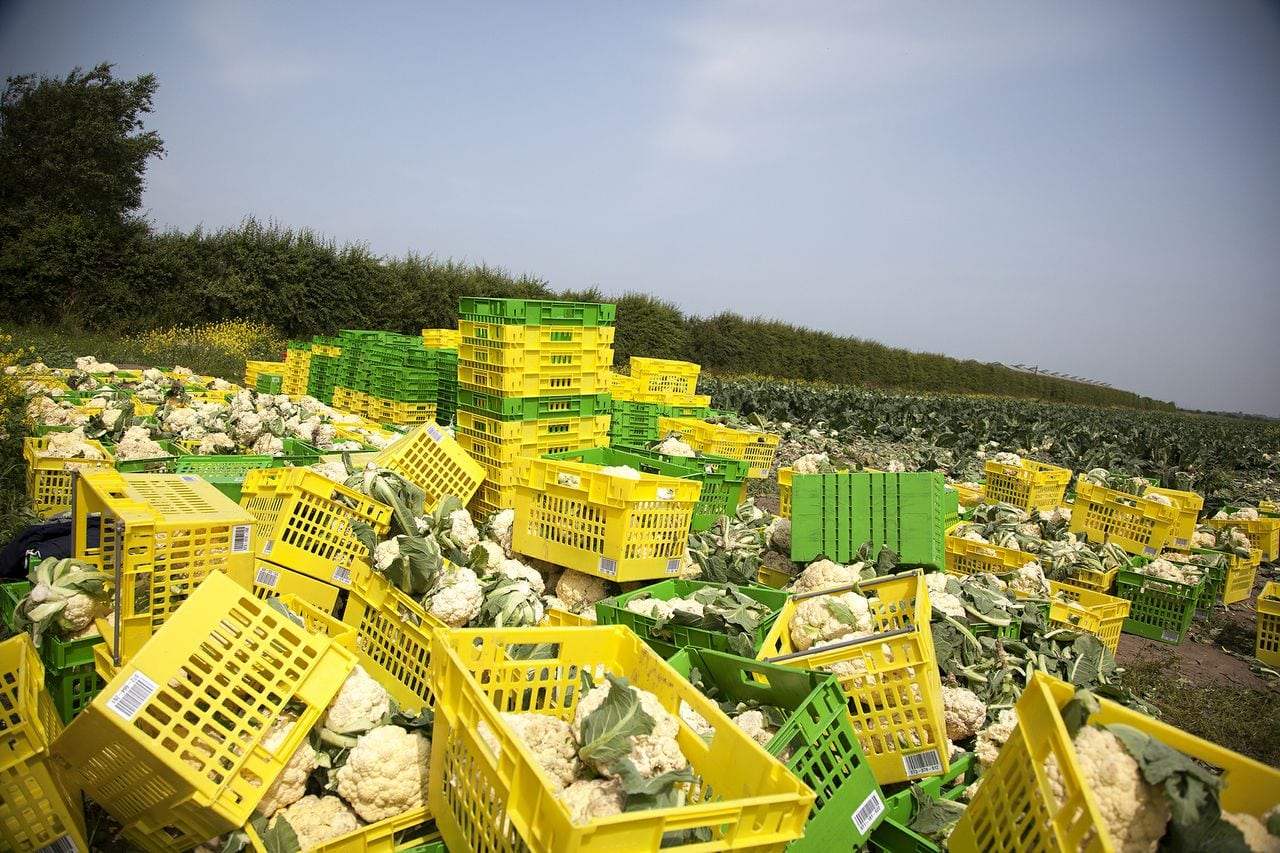 Feedback welcomes EU legislation on Unfair Trading Practices as a step towards a fairer food supply chain