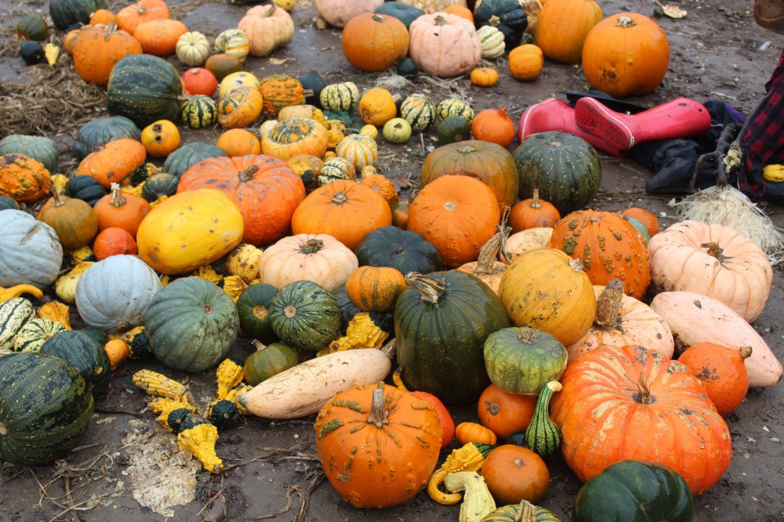 New report – how supermarkets drive food waste on UK farms