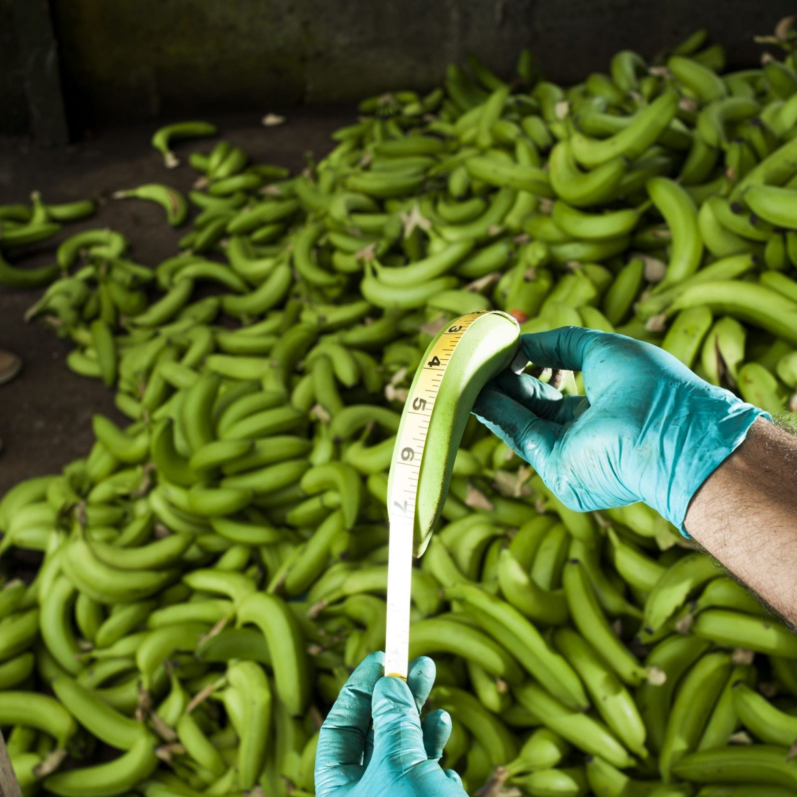 Ugly produce and food waste on farms