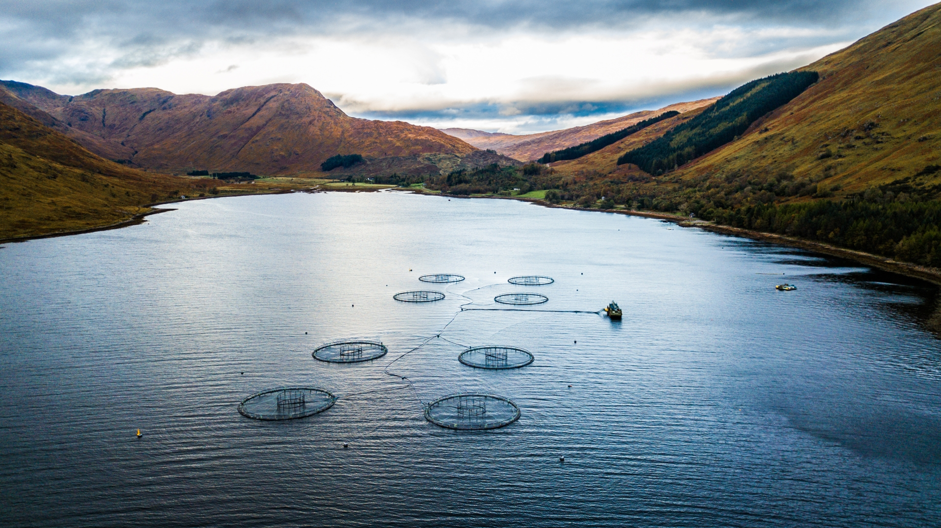 Farmed Scottish salmon – can we have our fish and eat it?