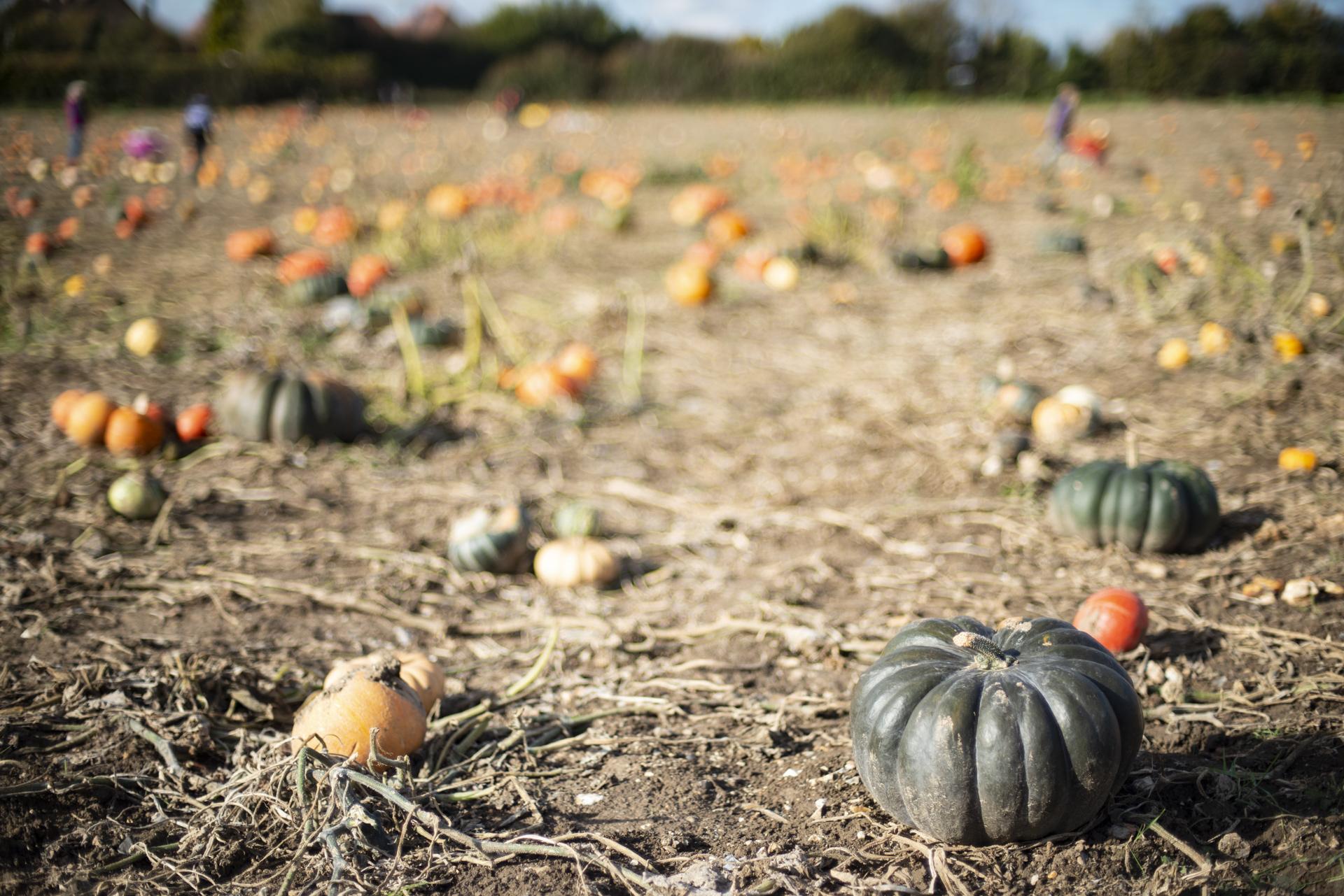 Spook-tastic ways to use pumpkins this Halloween